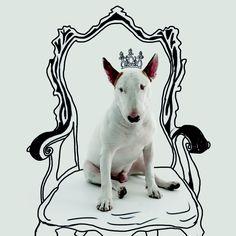 Depois de participar da campanha da Jimmy Choo, o famoso bull terrier do Instagram lança livro em São Paulo