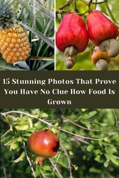 With no further ado, here are 30 stunning photos of how many of our common fruits and veggies actually grow. Wtf Fun Facts Funny, Crazy Funny Memes, Wtf Funny, Shoulder Length Layered Hair, Instagram Cartoon, Viral Trend, Selfie Ideas, The Incredibles, Interesting Stuff