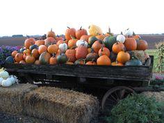 A wagon display of all the pumpkins I grow!