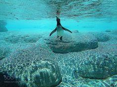 Underwater  by alis_black #nature #photooftheday #amazing #picoftheday #sea #underwater