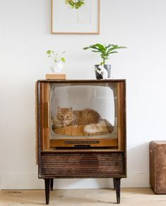 Vintage TV Turned Cat Bed: Unique Ideas for Repurposing Old TV - Home & Garden: Inspiring Interior, Outdoor and DIY Ideas Crazy Cat Lady, Crazy Cats, Big Cats, Cat Room, Home Tv, Pet Furniture, Cat Decor, Vintage Tv, Animal House