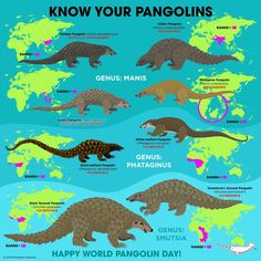 In honor of Endangered Species Day I would like to bring your attention to the Pangolins. These animals are the most trafficked in the… Pangolin Endangered, Endangered Species, Animals Of The World, Animals And Pets, Baby Animals, Funny Animals, Cute Animals, Marine Biology, Animal Illustrations