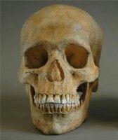 Este cráneo es del Homo Sapiens Sapiens, es decir, de los humanos.