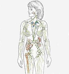 Sistema linfático corporal