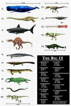 Size chart for mutants