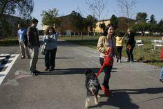 """Vizitatori si catei in cadrul evenimentului """" Ziua Portilor Deschise la Dogtown"""" Dogs, Animals, Animales, Animaux, Pet Dogs, Doggies, Animal, Dog, Animais"""