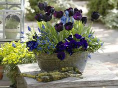 Night Blue Spring Collection Bulbs and biennial blue flowers for captivating spring pots and planters Container Flowers, Flower Planters, Container Plants, Container Gardening, Flower Pots, Vegetable Gardening, Gardening Tips, Beautiful Gardens, Beautiful Flowers
