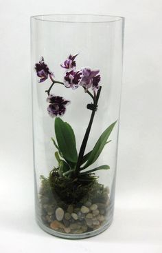 terrarium in a glass cylinder.Miniature orchid terrarium in a glass cylinder. Orchid Planters, Orchids Garden, Terrarium Cactus, Plant In Glass, Miniature Orchids, Growing Orchids, Paludarium, Phalaenopsis Orchid, Deco Floral