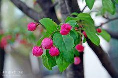 꽃봉우리   사용자 삽입 이미지