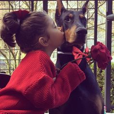 The Doberman Pinscher is among the most popular breed of dogs in the world. Known for its intelligence and loyalty, the Pinscher is both a police- favorite Cutie And The Beast, I Love Dogs, Cute Dogs, Animals For Kids, Cute Animals, Scary Dogs, Doberman Pinscher Dog, Doberman Love, Cute Friends