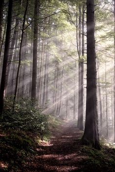 I only went out for a walk, and finally concluded to stay out till sundown, for going out, I found, was really going in ~ John Muir is part of Forest - Beautiful World, Beautiful Places, Beautiful Pictures, Foto Portrait, Nature Sauvage, Tree Forest, Forest Light, John Muir, Walk In The Woods