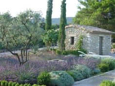 mediterranean garden with lots of lavender