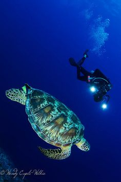 turtle and diver by wendymd, via Flickr