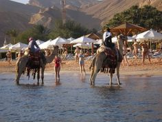 Camels on the beach in Taba, Egypt