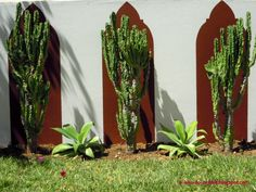 Euphorbias e agaves
