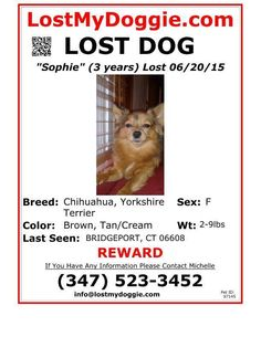 Bridgeport Animal Control support added 4 new photos. ** MISSING SINCE SATURDAY**  Please be on the lookout for a female Chihuahua/Yorkie Mix, 3 years of age and very small. She is missing from the area of Williams Street in Bridgeport. If you have any information of her whereabouts, please contact Bridgeport Animal Control.  Bridgeport Animal Control  236 Evergreen Street Bridgeport, CT 06606 (203)576-7727 Animal.Shelter@bridgeportct.gov
