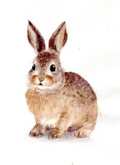Bunny Painting, Painting & Drawing, Animal Sketches, Animal Drawings, Watercolor Animals, Watercolor Paintings, Easter Art, Easter Bunny, Rabbits