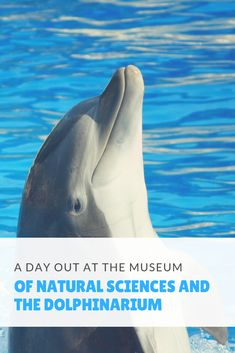 A day out at the Museum of sciences in Constanta New Facebook Page, We The Best, Days Out, Science And Nature, Travel Around, Beautiful World, Family Travel, Vacations, Places To Visit