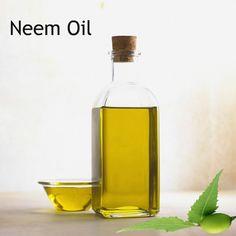 215 best Neem Oil images in 2018 | Neem oil, Conditioner