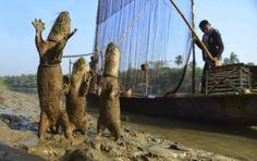 Этот прекрасный мир: Необычный способ ловли рыбы в Бангладеше