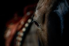 Reining Horses, Ranch, Animals, Guest Ranch, Animales, Animaux, Animal, Cutting Horses, Animais