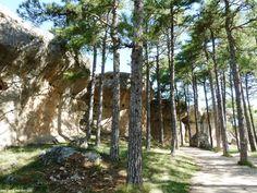 Formaciones rocosas entre los pinares de la Ciudad Encantada. Rock formations between the pine forests of the Enchanted City
