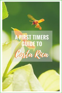The Central American country of Costa Rica is an amazing and diverse place, but can be challenging to get around to some of the more remote regions. Here's a breakdown of what to eat, when to go, where to stay, and things to do in Costa Rica especially your first time. The first timers guide to Costa Rica, unofficially The Happiest Country in the World!| #CostaRica #puravida Costa Rica attractions, Things to do in Costa Rica, Where to Go in Costa Rica