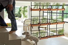 Creative Room Dividers with Hanging Planter