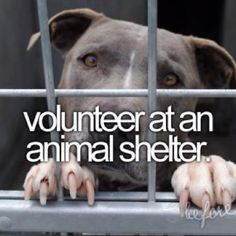 YES PLEASE!!!!!!! Some of my best days  were  spent loving on homeless animals.