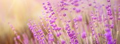Make your perfume solid with lavender. Unlike conventional perfumes . Solid Perfume, Sweet Almond Oil, Shea Butter, Sprinkles, Moisturizer, Fragrance, Candy, Make It Yourself, How To Make