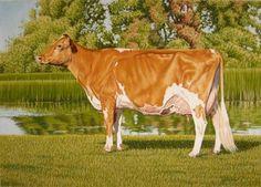 West Lynn Tom Dee by Gary Sauder - Guernsey cow