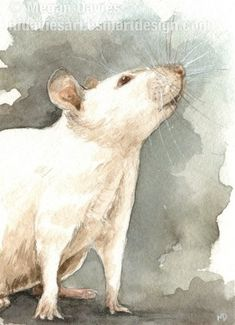 Curious Rat ACEO by Pannya on DeviantArt