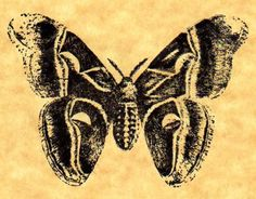 Promethea Moth Rubber Stamp by ButterSideDownStamps on Etsy