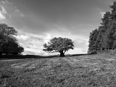 THE POLE OF INACCESSIBILITY: ALBERO NASCENTE  Natura contemplata sotto splendid...