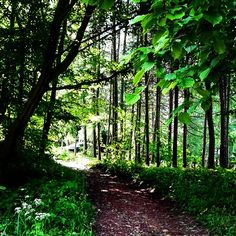 #forest#path#shadow#sun#green#nature#summer