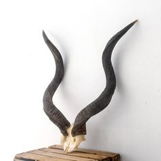 Kudu Horns II, $208, now featured on Fab.