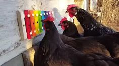 Attach a Xylophone to the wall of your chicken coop...I like this idea way better than wind chimes!
