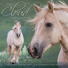 The Cloud Foundation 2015 Wild Horse Calendar  by WildHoofbeats