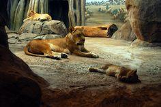 mz-10 Milwaukee Zoo, Kangaroo, Animals, Baby Bjorn, Animais, Animales, Animaux, Animal, Kangaroos