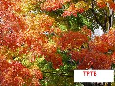 Exploring a Trees and Leaves Theme - - Pinned by #PediaStaff.  Visit http://ht.ly/63sNt for all our pediatric therapy pins