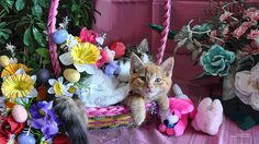 easter pictures with cats   5692022718_a3980dc645_z.jpg