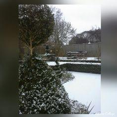 Buxus contouren in de sneeuw komen goed uit. Het vele knipwerk dat Edwin van de zomer heeft verricht  word nu beloond.