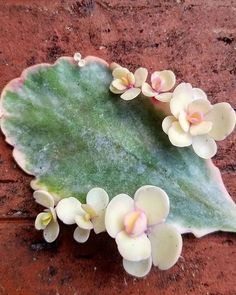 Precious little ones. #succulove shared by @sunshine_succulents #minigardens #littlegardens