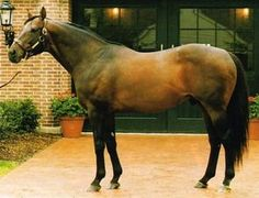 Fappiano bay h (USA) 1977 (Mr Prospector-Killaloe), sire of Unbridled, winner of the 1990 Kentucky Derby & ancestral sire of American Pharoah, winner of the 2015 Kentucky Derby & Preakness Stakes.