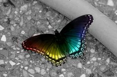 rainbow-colored-butterfly.jpg