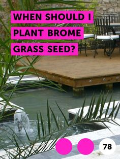 When Should I Plant Brome Grass Seed?. Bromegrass is  a long-stemmed grass used most often in commercial situations. Since bromegrass is a long-stemmed grass rather than turf (lawn) grass, it is most commonly dried, bundled and used as hay for horses and other livestock. Bromegrass takes some specific care during planting and growing.