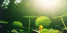 Mostra Horizontes Naturais de fotografia abre hoje em Vinhedo | Agência Social de Notícias