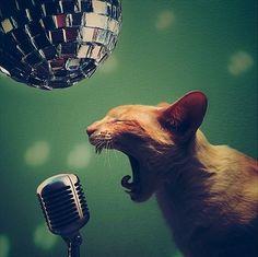 Co dziś śpiewacie, nucicie, mruczycie…? :)
