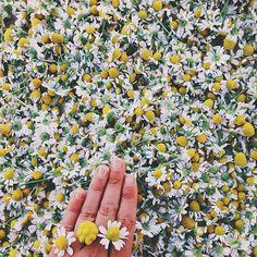 chamomile bling by @fareisle on instagram