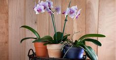 Átültednéd az orchideát? Mikor, melyiket, hogyan? Mutatjuk!
